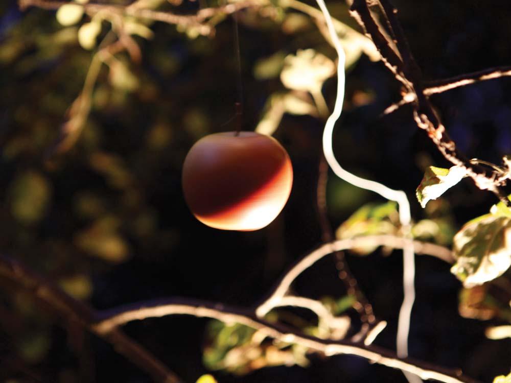 Apfel Nachts