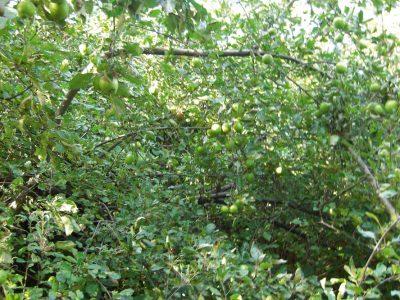 Ausstellung Eden #2 Gartenkunstnetz