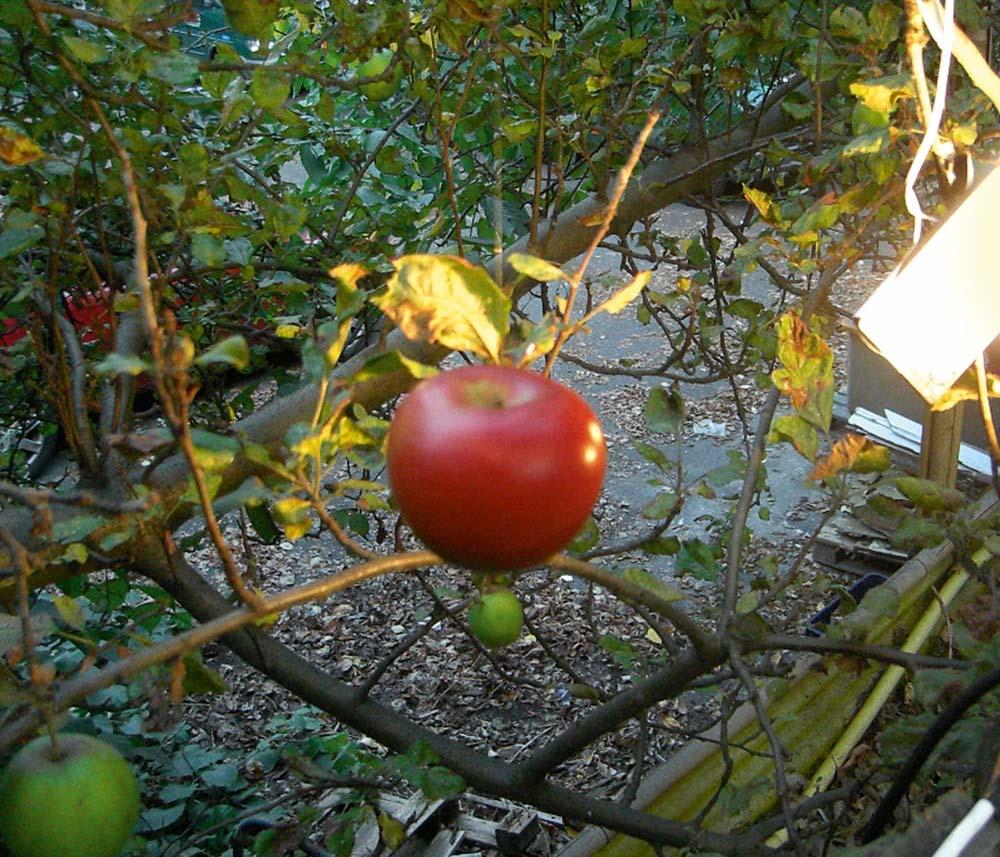 Der Planet im Apfelbaum
